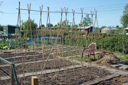 how to build support for green beans