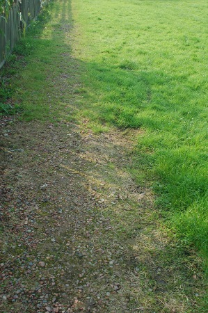 weeds in a gravel path bifurcated carrots. Black Bedroom Furniture Sets. Home Design Ideas